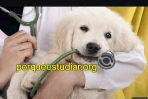 Donde Estudiar Medicina Veterinaria en Estados Unidos