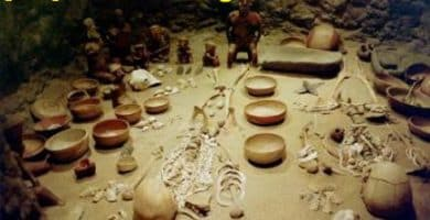 Tipos de Ramas de la Antropología