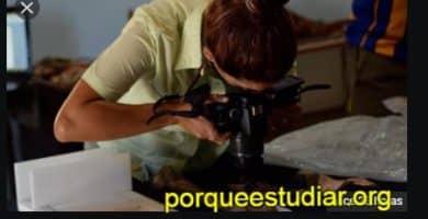 Donde Estudiar Antropología