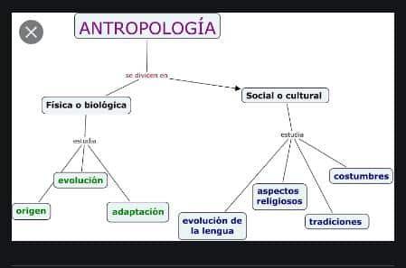 cuadro sinoptico de las ramas de la antropologia