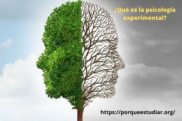 Qué es la psicología experimental y que estudia