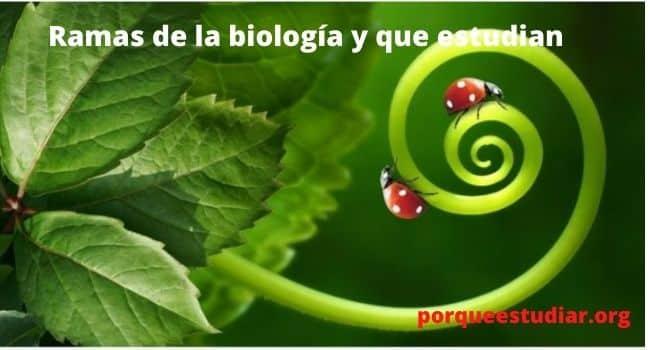 Ramas de la biología y que estudian